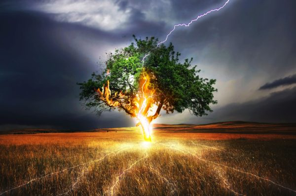 A tree in a field during a storm being struck by lightening.